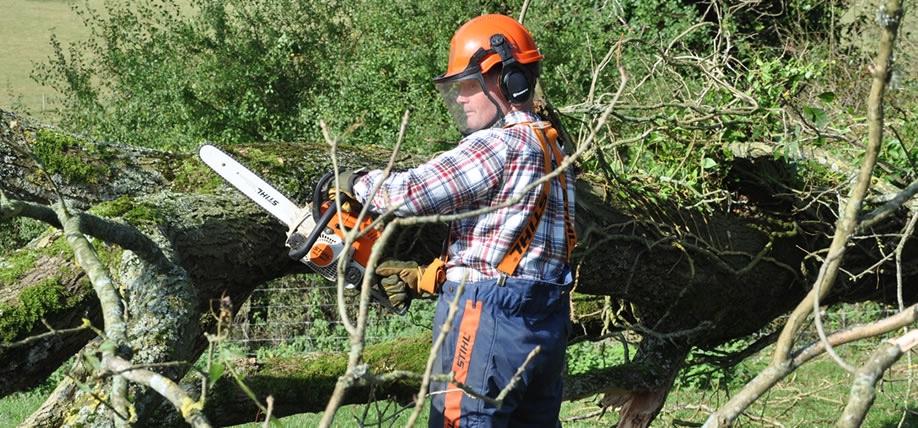 Gary Mortley Tree Cutting